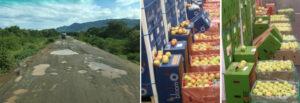 Afrigo Global-independent freight forwarder